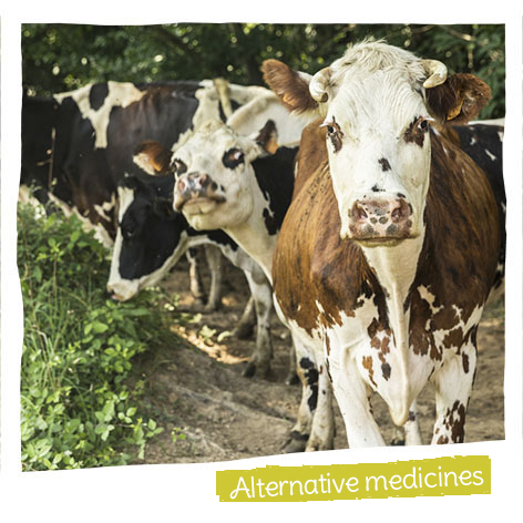 We encourage the use of alternative medicines, including essential oils, for treating animals.